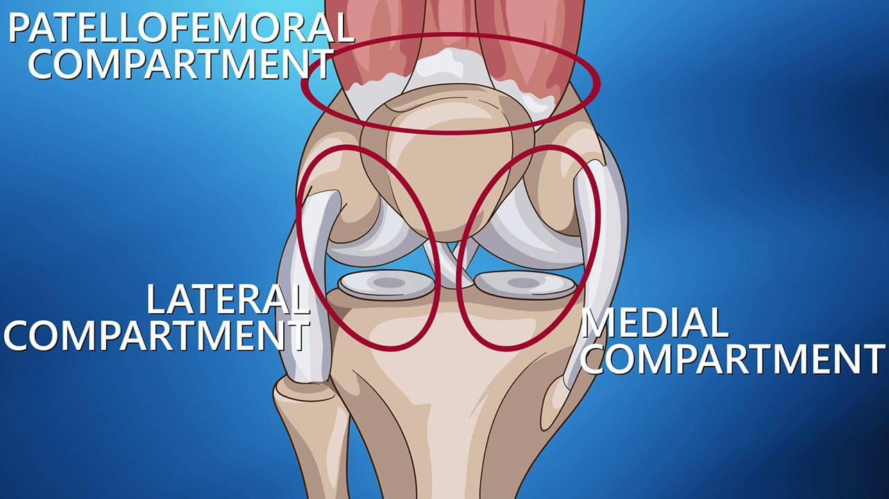 Compartments of the knee diagram